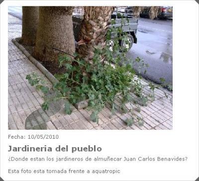 20100511190228-plantas-sin-cuidar.jpg