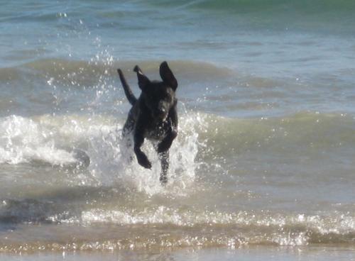 20110817125505-perro-en-la-playa.jpg