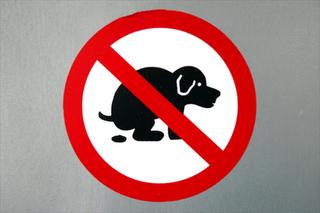 20110901142219-prohibido-perro-cagando.png