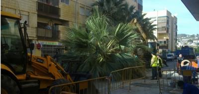 20111222183824-corte-palmeras-500.jpg