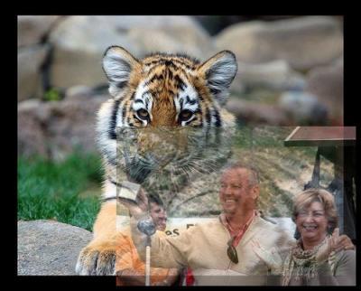 20100525174622-tigre1-500.jpg