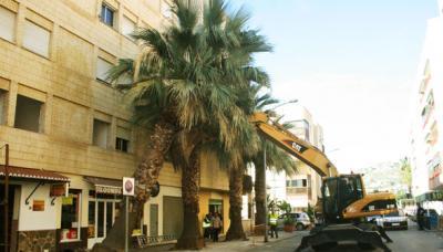 20111222183401-palmeras590.jpg